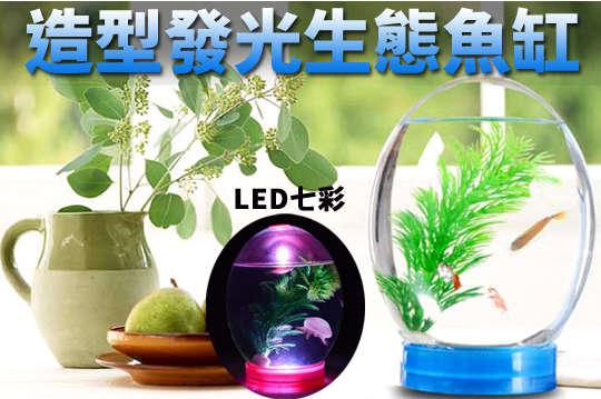 每入只要275元起,即可享有LED七彩造型發光生態魚缸〈任選一入/二入/三入/四入/六入/八入/十入,顏色可選:粉/藍〉