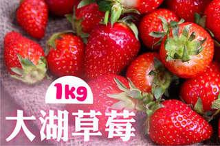 每盒只要625元起,即可享有苗栗大湖草莓(2~3號果)〈一盒/二盒/四盒/八盒〉