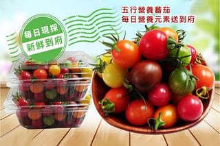 細嫩外皮加上脆甜果肉,酸中帶甜的濃厚番茄味,讓你吃一口便欲罷不能!【開運良食-溫室栽培五彩小精靈番茄】,小小一顆營養多多,天天吃健康又美麗!