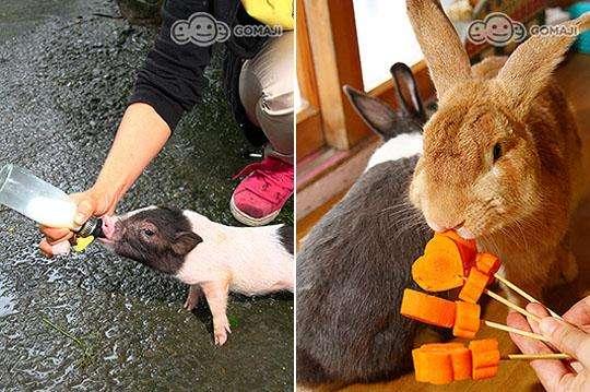 让小朋友亲近动物的最佳农场,能餵食动物,品尝乳制品,还能将祝福写在