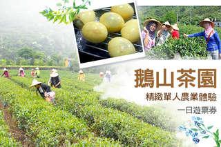 每張只要225元,即可享有【宜蘭-鵝山茶園】單人精緻農業體驗一日遊票券〈含茶燻蛋DIY   伴手禮-綠茶(一兩)〉(二張/三張)
