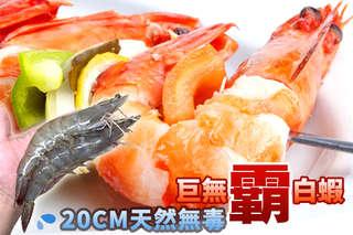 【20CM天然無毒巨無霸白蝦】海水養殖、活體急凍,肉質密實甜美而彈牙,飽滿扎實,美味輕鬆上桌!