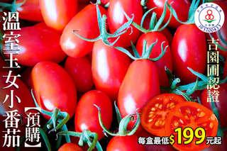 讓水果不再只是水果而已!【吉園圃認證溫室玉女小番茄】採用細心的照料,讓小番茄化身成為自然界的紅寶石,每一口都能給予您飽滿多汁的鮮甜感受~~