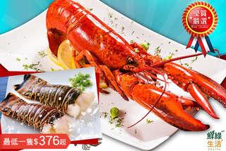 只要889元起,即可享有加勒比海野生龍蝦身/鮮凍波士頓熟龍蝦〈2隻/4隻/8隻/12隻〉