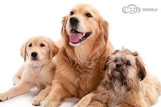 只要999元起,即可享有【Madou寵物沙龍】A.小型犬(8kg以下) / B.中型犬(8~15kg