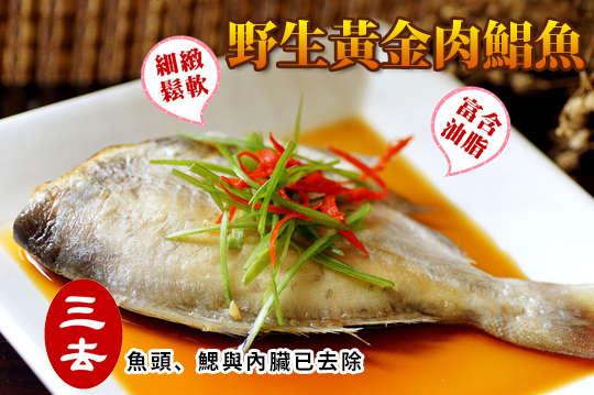 每隻只要22元起,即可享有野生黃金肉鯧魚〈12隻/20隻/32隻/48隻/80隻/100隻/120隻〉