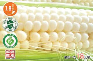 慶祝鮮綠農產網路月破十萬支【白色水果玉米】,如水果般鮮甜爽脆,好吃破表!