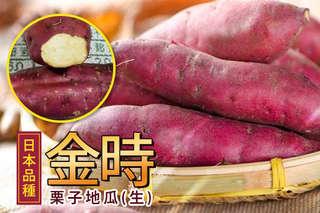 每斤只要82元起,即可享有日本金時栗子地瓜(生)〈5斤/10斤/15斤/20斤〉