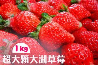每公斤只要549元起,即可享有超大顆苗栗大湖草莓〈1公斤/2公斤/3公斤/4公斤/6公斤/8公斤〉