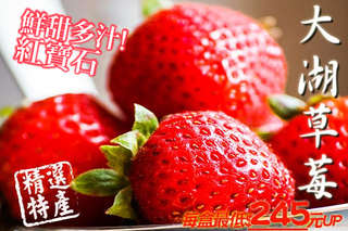 鮮甜多汁紅寶石 ~【XXL巨無霸鮮甜大湖草莓】超大顆King Size,香氣新鮮濃郁,口感香甜多汁,粒粒飽滿,鮮紅光澤誘人,果肉微酸甜度恰到好處。