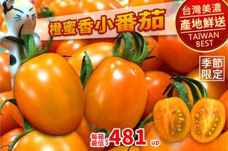 只要599元起,即可享有美濃超人氣橙蜜香小番茄(5斤/10斤)等組合