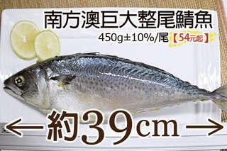 每尾只要54元起,即可享有南方澳巨大整尾鯖魚〈6尾/12尾/20尾/40尾〉