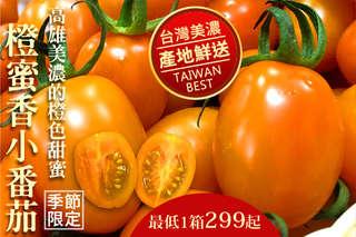 每箱只要299元起,即可享有美濃超人氣橙蜜香小番茄3斤超足重〈一箱/二箱/三箱/四箱/六箱/九箱〉