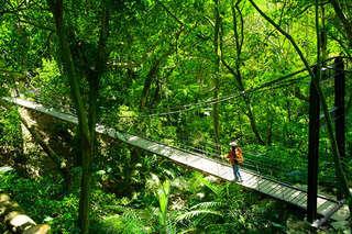 【三峽-大板根森林溫泉渡假村】享受山嵐圍繞的觀景風呂、徜徉極品森林浴,還有觀景養生餐,美湯芬多精之旅就在這一刻!