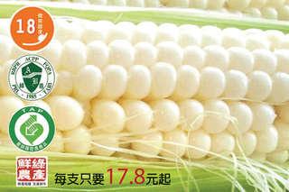 每支只要17.8元起,即可享有【鮮綠】產銷履歷-18度高甜度白色水果玉米〈20支/40支/80支〉