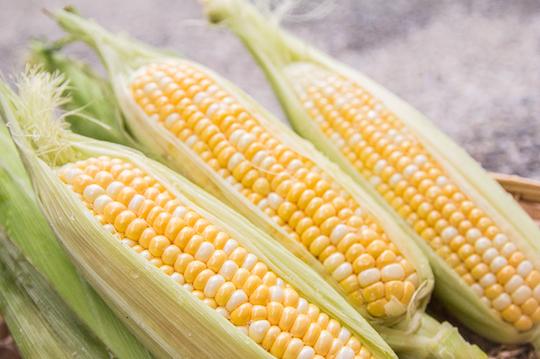 水果玉米_正宗美国品种双色水果玉米,特色皮薄多汁,甜度破表如同水果般香甜