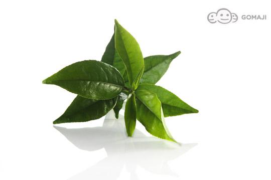 背景 壁纸 绿色 绿叶 盆景 盆栽 树叶 植物 桌面 540_359