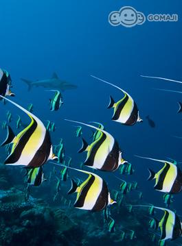 来到帛琉就是要深度探索海底的美丽世界!