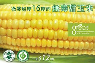 每支只要12元起,即可享有微笑甜度16度的無毒甜玉米〈10支/30支/60支〉