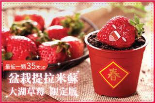每顆只要35元起,即可享有【木匠手作】盆栽提拉米蘇-大湖草莓限定版〈10顆/20顆/30顆/50顆/80顆/100顆/ 〉