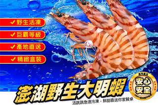 每尾只要59元起,即可享有頂級台灣澎湖野生鮮嫩大明蝦〈10尾/20尾/40尾/60尾/80尾〉